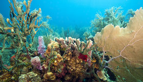 Coral gardens Royalty Free Stock Images