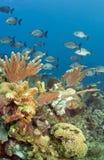 Coral Gardens. Underwater off the coast of Roatan Honduras, Coral gardens Stock Image