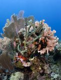 Coral Gardens Stock Photography