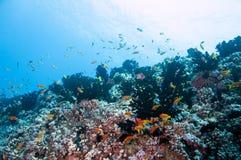 Coral Gardens Arkivfoto