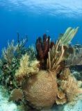 Coral gardens with branching tube sponge. Underwater Coral gardens off the coast of Roatan Honduras stock photos