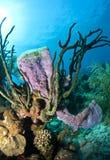 Coral Gardens, Honduras Royalty Free Stock Photo