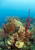 Coral Gardens Honduras Stock Photography