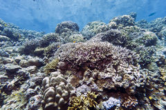 Coral gardens - Indonesia Royalty Free Stock Photography