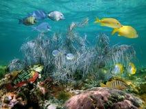 Coral gorgonian grande na água pouco profunda imagens de stock royalty free
