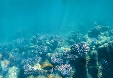 Coral in the Great Barrier Reef in Australia Royalty Free Stock Photography