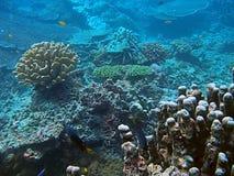 Coral habitat. Underwater coral animal habitat in Thailand Stock Photos