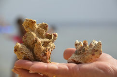 Coral in hand Royalty Free Stock Photos