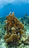 Coral head Stock Images
