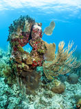 Coral head Stock Image
