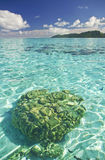 Coral head in blue lagoon Royalty Free Stock Photography
