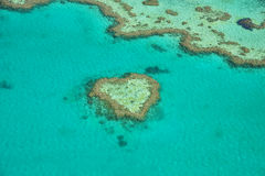 Coral heart Stock Photos