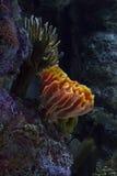 Coral hermoso Fotos de archivo