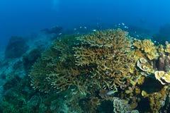Coral hermoso en Koh Tao, Tailandia imagen de archivo