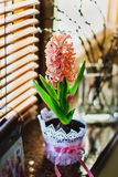 Coral hyacinth Royalty Free Stock Image