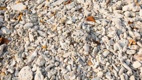 Coral inoperante Imagem de Stock
