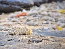 Coral inoperante na praia Fotos de Stock Royalty Free