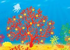 Coral, jellyfish, crawfish, shell Stock Photos