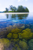 Coral in Koh Matsum. Royalty Free Stock Images