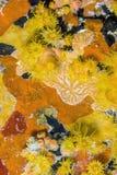 coral kubki pomarańcze Obraz Stock