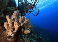 Coral landscape Stock Photo