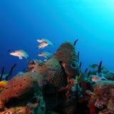 Coral Landscape colorée de mer des Caraïbes Photographie stock libre de droits