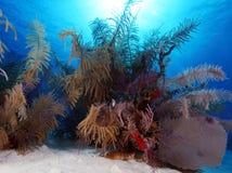 Coral Landscape colorida del mar del Caribe Imagen de archivo libre de regalías
