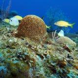 Coral Landscape colorida del mar del Caribe Fotografía de archivo libre de regalías