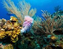 Coral Landscape colorida del mar del Caribe Imagenes de archivo