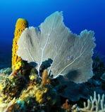 Coral Landscape colorida del mar del Caribe Foto de archivo