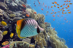Coral landscape.Red Sea. Egypt Royalty Free Stock Images