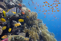 Coral landscape.Red Sea. Egypt Stock Photos
