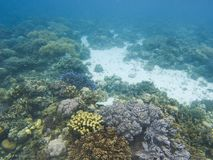 Coral landscape on tropical sea bottom. Young coral reef ecosystem.