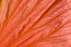 Coral Leaf Royalty Free Stock Images