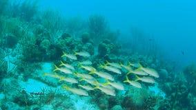 Coral life caribbean sea Bonaire island underwater diving  1080P video. Coral life underwater video 1080p Caribbean Sea stock video