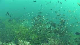 Coral life diving Mozambique South Africa Underwater Video stock video