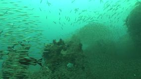 Coral life diving Mozambique South Africa Underwater Video stock video footage