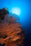Coral life diving Papua New Guinea Pacific Ocea Stock Photos