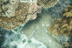 Coral Life in the Great Astrolabe Reef Royalty Free Stock Photos
