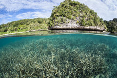 Coral and Limestone Islands Royalty Free Stock Images