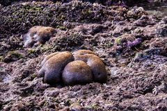 Coral at low tide, Nusa Penida, Indonesia Royalty Free Stock Images
