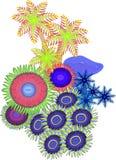 Coral macio Imagens de Stock