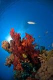 Coral macio com peixes imagens de stock