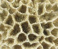 Coral Royalty Free Stock Photos