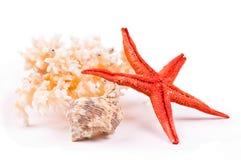 Coral, mar-estrela e seashell Fotografia de Stock
