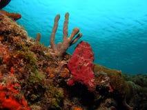 Coral mound Royalty Free Stock Photos