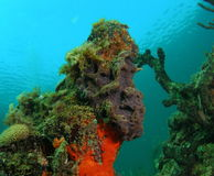 Coral Mound Stock Photos
