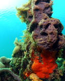 Coral Mound Royalty Free Stock Image