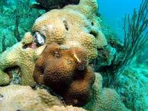 Coral Mound Stock Photo