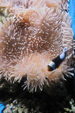 Coral and moved fish. In the undersea world Royalty Free Stock Photo
